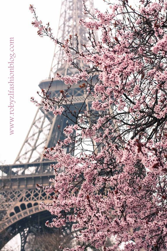 paris_flower_love_robyzl_serendipity_Tour