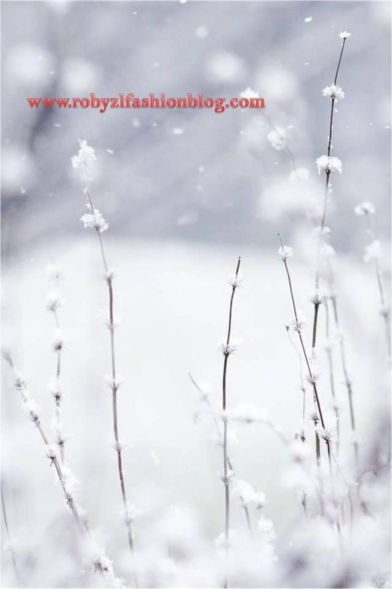 snow_neve_robyzl_serendipity