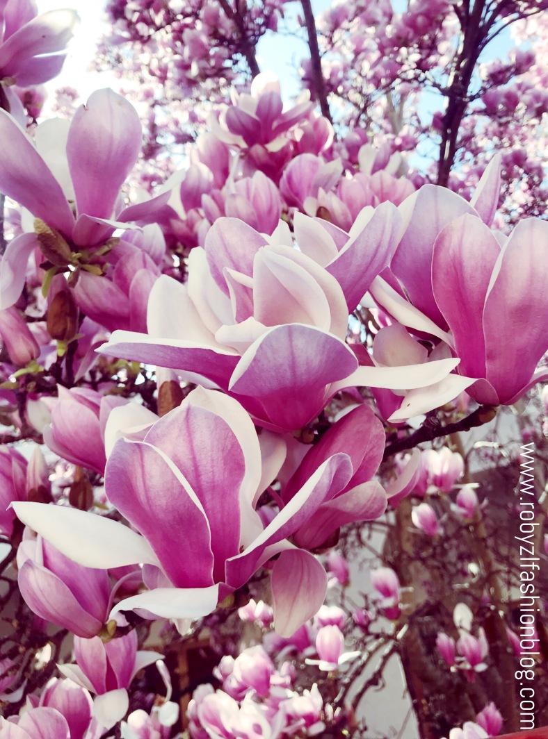 spring_robyzl_serendipity_love